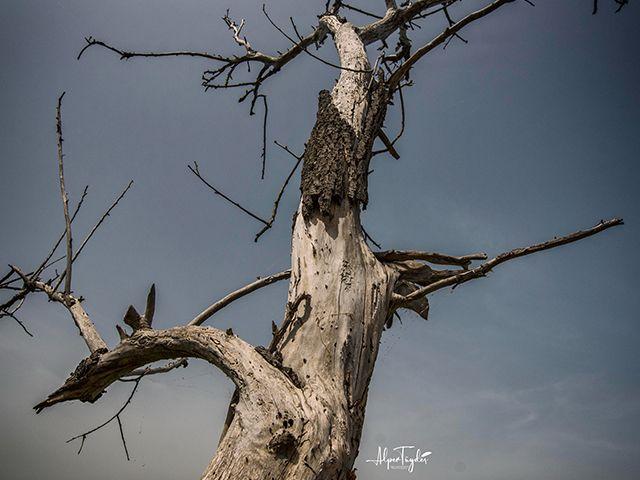 Alper Tüydeş'in Objektifinden Kuru Ağaçların Büyüleyici Öyküsü