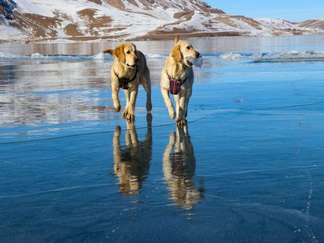 Balık Gölü'nün buzla kaplı yüzeyinde oyun oynayan köpekler izleyenleri gülümsetti