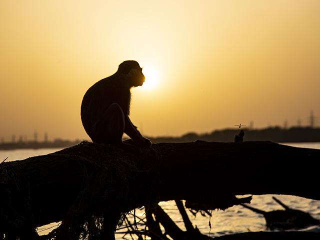 Sudan'ın başkenti Hartum'daki Beyaz Nil nehri manzaraları
