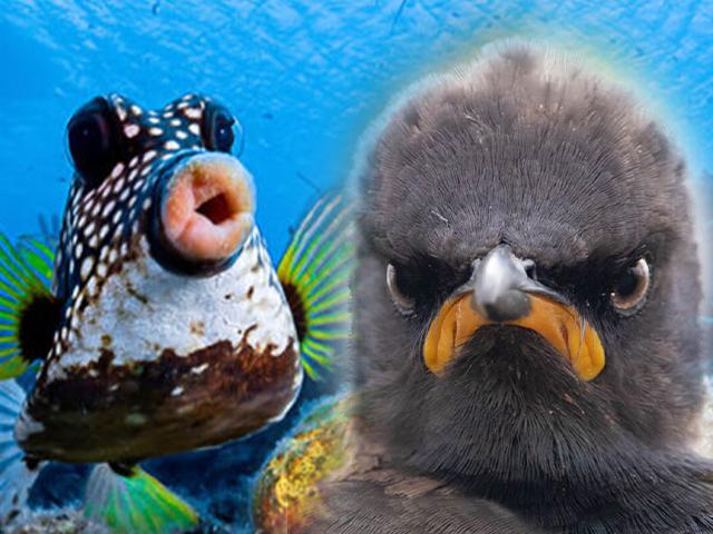 Comedy Wildlife Photography: 2021 Yılının Birbirinden Komik Doğa Fotoğrafları