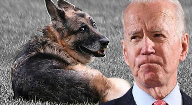 ABD Başkanı Biden, köpeğinin ölümünü duyurdu