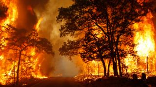 ABD'de orman yangınlarıyla mücadeleye katılan kadın mahkumlara ceza indirimi uygulandı