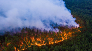 """""""Bodrum Fesleğen Yaylası'nda yangın korkunç bir noktaya ilerliyor"""""""