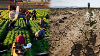 Küresel İklim Krizi'nden en çok etkilenen sektör: Tarım
