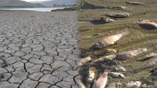 Balık ölümleri artıyor! En büyük nedeni ne?
