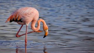 Flamingoların uğrak noktası Akgöl kurudu
